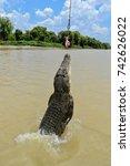 jumping adult saltwater... | Shutterstock . vector #742626022