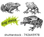 Frogs Hand Drawn Sketch...