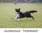 border collie dog running on... | Shutterstock . vector #742646605