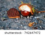close up of chestnuts in late... | Shutterstock . vector #742647472