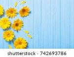Calendula Flowers On Blue...