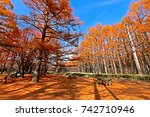 pine trees in autumn | Shutterstock . vector #742710946