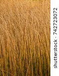 reed on background  pattern...
