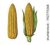 set of ripe corn cobs. with... | Shutterstock .eps vector #742775368