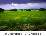 uncultivated green field with... | Shutterstock . vector #742785856