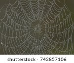 spider net after rain | Shutterstock . vector #742857106