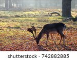 a deer feeding at dunham massey ... | Shutterstock . vector #742882885