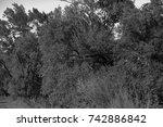 autumn landscapes of the autumn ...   Shutterstock . vector #742886842