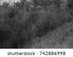 autumn landscapes of the autumn ...   Shutterstock . vector #742886998