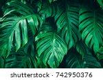 tropical jungle foliage  dark... | Shutterstock . vector #742950376