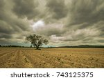 Lonely Tree Before A Storm