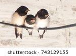 Three Birds Sit On Power Lines...