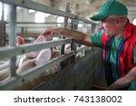 Farmer And Pigs On A Pig Farm.