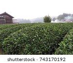 uji green tea fields  | Shutterstock . vector #743170192