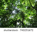 green leaf in the forest | Shutterstock . vector #743251672