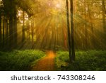 Light Ray And Trees At The...