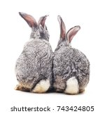 Stock photo grey baby rabbits on a white background 743424805