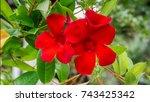 sundaville beauty burgundy... | Shutterstock . vector #743425342