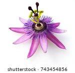 Passiflora Violacea  Violette