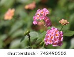 zinnia | Shutterstock . vector #743490502