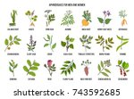 best herbal aphrodisiacs. hand... | Shutterstock .eps vector #743592685