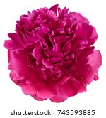 peony bud petals red and pink...   Shutterstock . vector #743593885