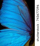 Stock photo wings of a butterfly morpho texture background morpho butterfly 743677396