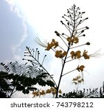 beautiful yellow flower isolated | Shutterstock . vector #743798212