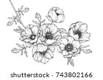 anemone flowers drawing with... | Shutterstock .eps vector #743802166