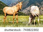 Stock photo two horses grazing in mountain field 743822302