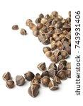 moringa oleifera seeds on white ...   Shutterstock . vector #743931406