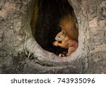 Small photo of squirrel sits in the tree hollow and eat the nut