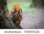 ore squirrel sits on the trunk... | Shutterstock . vector #743935132