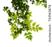 tree branch isolated | Shutterstock . vector #743963878