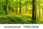wild natural forest in the warm ... | Shutterstock . vector #744013648