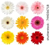 Stock photo set of colorful gerbera roses flowers collection isolated on white background red pink yellow 744036718