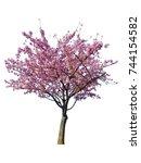 japanese sakura flower  pink... | Shutterstock . vector #744154582