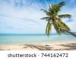 Coconut Trees Stretch Into The...