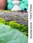 beautiful green moss in the... | Shutterstock . vector #744175366