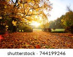 colorful autumn forest.... | Shutterstock . vector #744199246