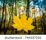 autumn. yellow autumn tree.... | Shutterstock . vector #744237232