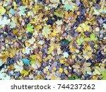 autumn. orange autumn tree.... | Shutterstock . vector #744237262