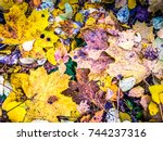 colorful autumn leaves... | Shutterstock . vector #744237316