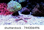 fromia elegance starfish  | Shutterstock . vector #744306496