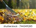 Raking Fallen Leaves In The...
