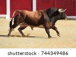 bull   Shutterstock . vector #744349486