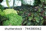 wild plant garden plants... | Shutterstock . vector #744380062