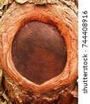 Small photo of beautiful tree hole in tree trunk