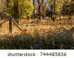 rusted  old wood and barbed... | Shutterstock . vector #744485836