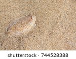 close up underwater photo of... | Shutterstock . vector #744528388